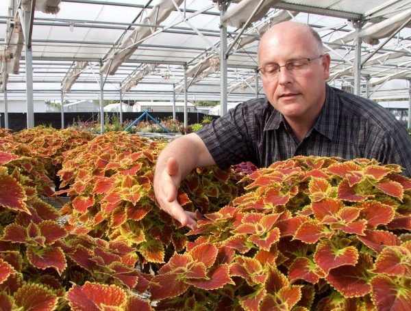 """DR. DAVID CLARK SHOWING SOME OF HIS COLEUS AT A GREENHOUSE AT UF/IFAS IN GAINESVILLE. CREDIT: """"UF/IFAS photography."""""""